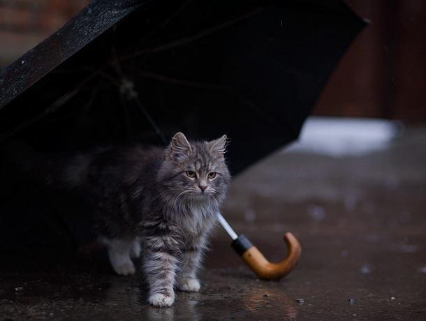Пасмурный и холодный день ждет Ставрополь в пятницу