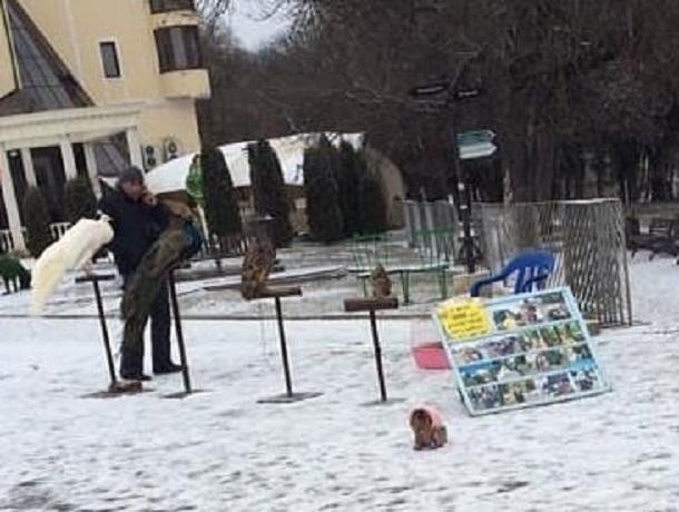 «Это ведь живодерство!»: ессентучан возмутило использование животных для фотоаттракциона зимой