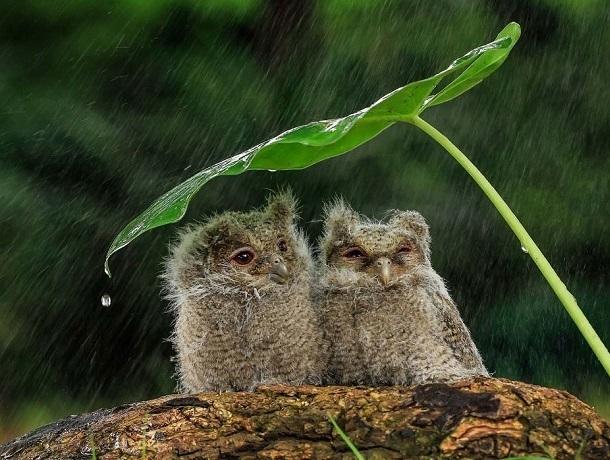 Дождь и ветер ждут ставропольцев в субботу