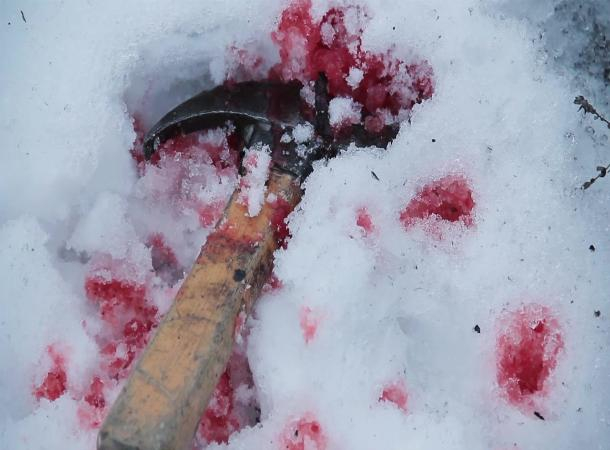 Жительница Ставрополья досмерти забила сожителя молотком