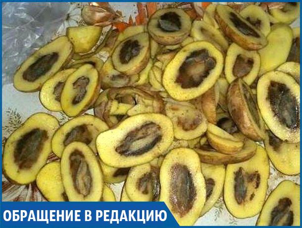 «Вот такой вот «свежий урожай» продают в известных магазинах» - жительница Михайловска