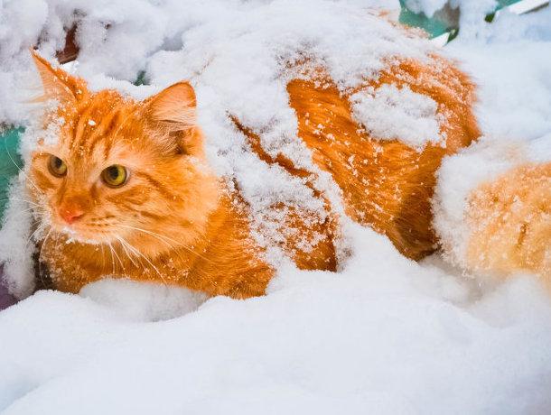 Снег и мороз ожидаются в Ставрополе в субботу