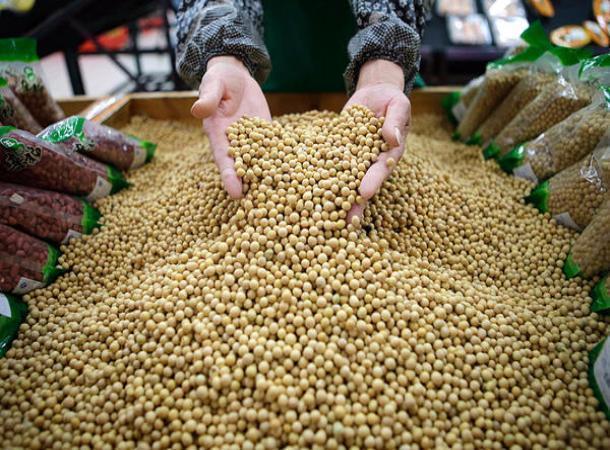 НаСтаврополье появится завод поглубокой переработке сои
