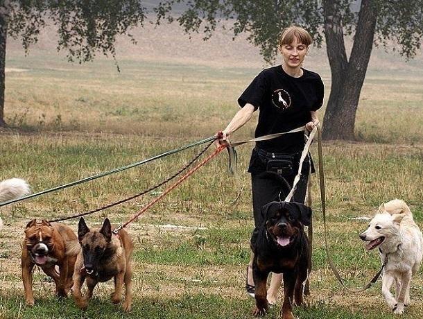 Убирать за своими собаками во время выгула обяжут жителей Кисловодска