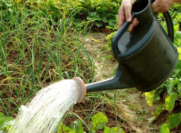 Гражданин Невинномысска выращивал коноплю насвоем огороде