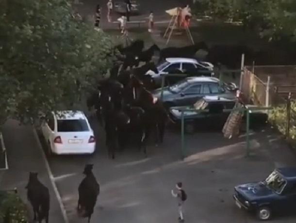 Большой табун лошадей промчался по одной из улиц в Кисловодске