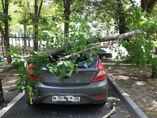 На припаркованную возле дома машину упало дерево в Ставрополе