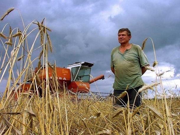 Почти 700 миллионов рублей выделило правительство начинающим и семейным фермерам на Ставрополье