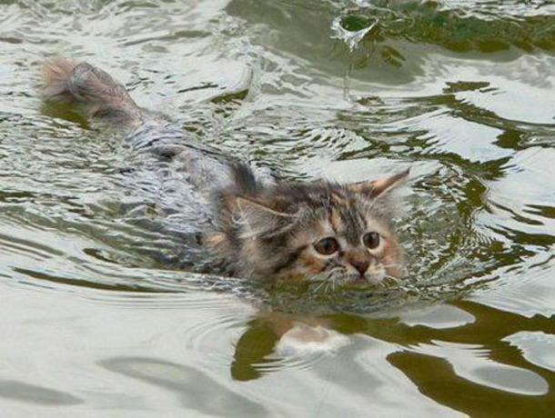 Сотни погибших животных захоронили ветеринары после подтопления наСтаврополье