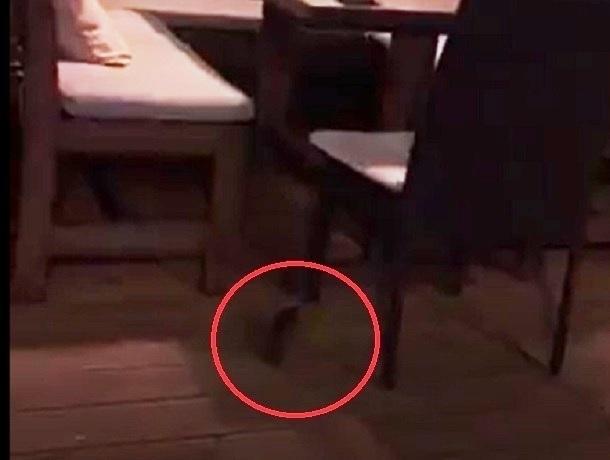 Бегающая под столами крыса напугала посетителей кафе «Орегано» в Ставрополе и попала на видео