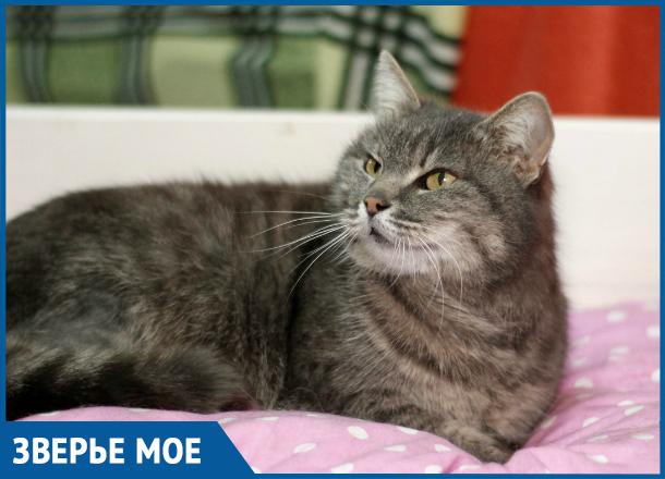 Кошка Дымка из Ставрополя готова к переезду