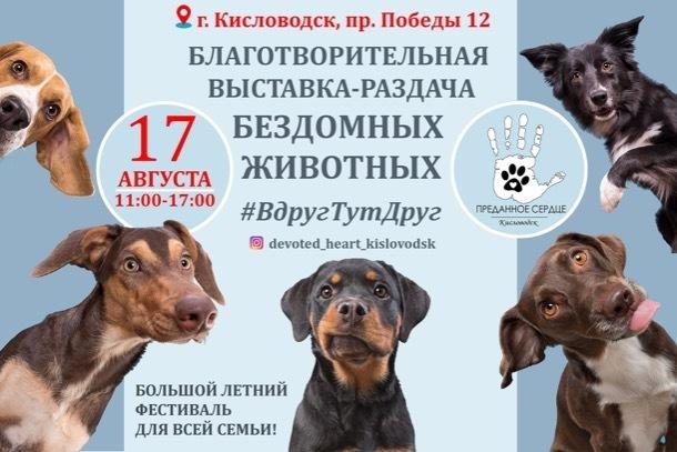 В Кисловодске 17 августа бездомным животным помогут найти дом