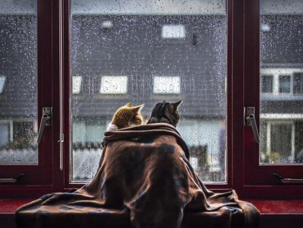 Всю рабочую неделю на Ставрополье будут идти дожди