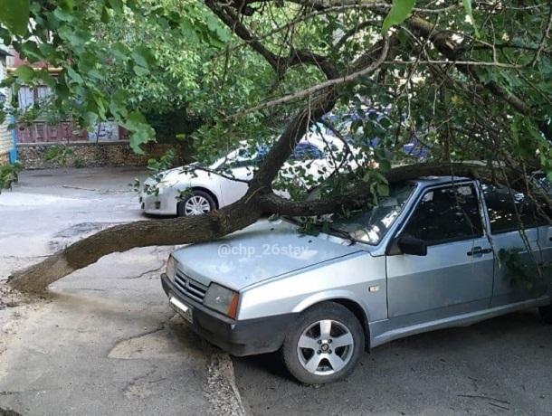 Дерево рухнуло на припаркованное у дома авто в Ставрополе