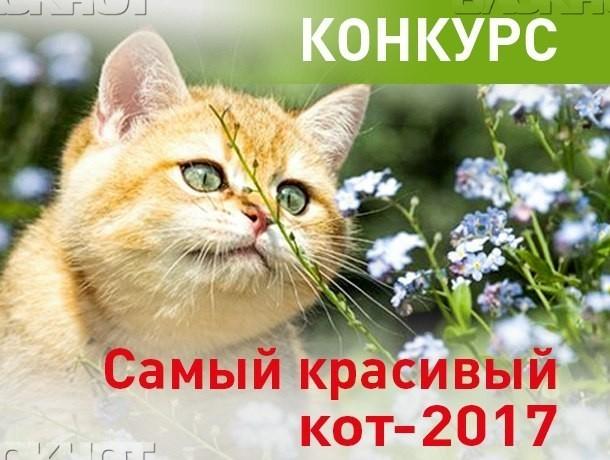 Объявляем победителей конкурса «Самый красивый кот-2017»