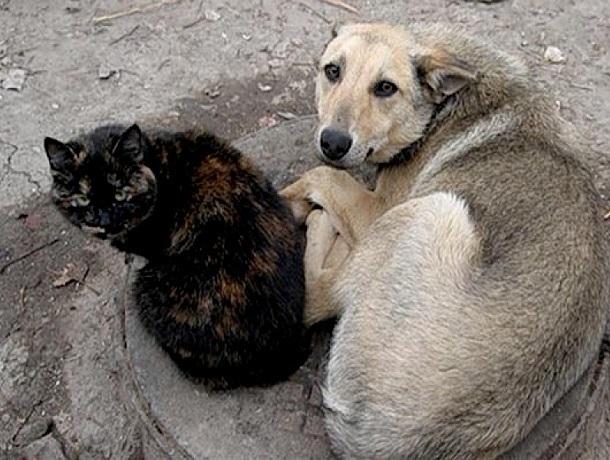 «И так сойдет»: отлов собак в Ставрополе происходит только после жалоб жителей