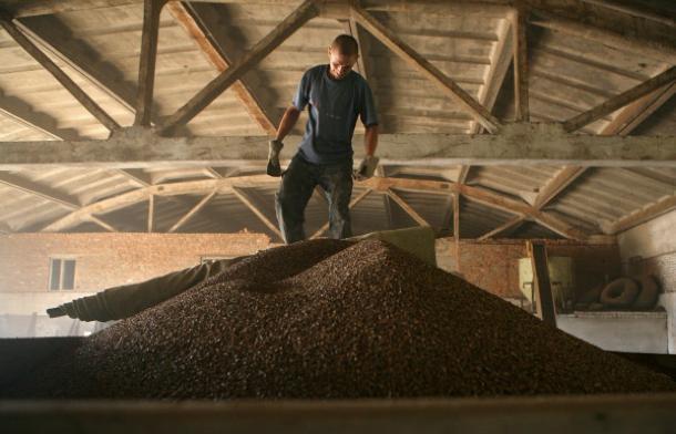 Директор Ставропольской компании растратил пшеницы на 23 миллиона рублей