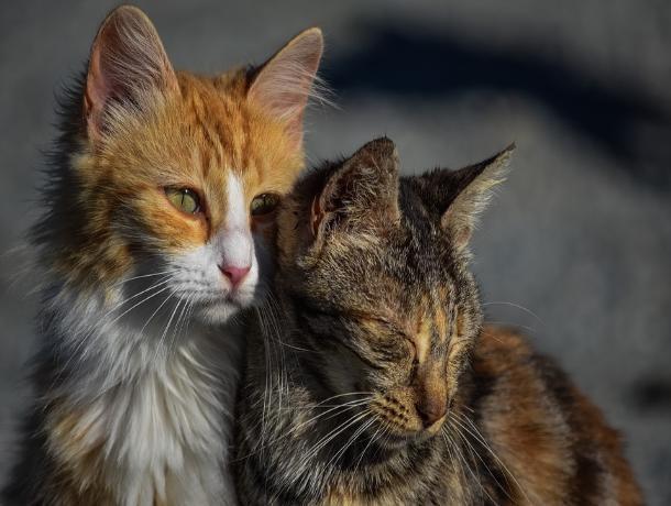 В Ставрополе расскажут о проблемах бездомных животных