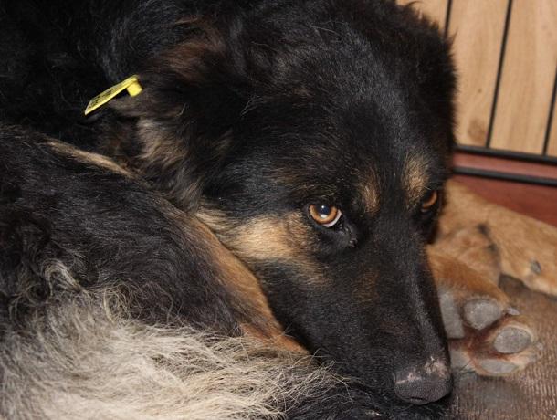 Московские волонтеры приедут спасать бродячих собак в Ессентуки