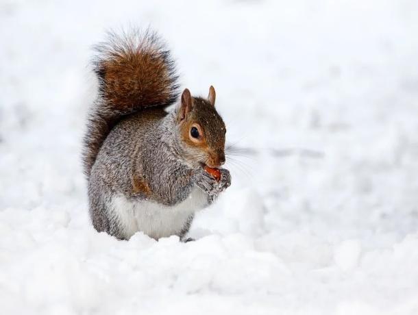В первый понедельник зимы пойдет снег