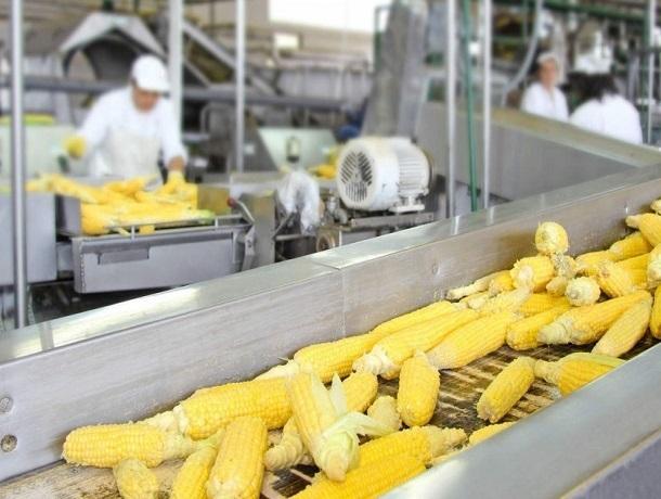 Французы хотят построить завод по производству семян на Ставрополье