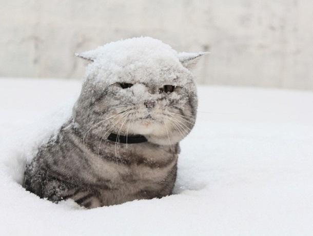 Сильный снег и мороз накроют Ставрополь в четверг