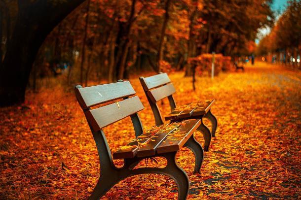 Один из парков Пятигорска преобразится в будущем году