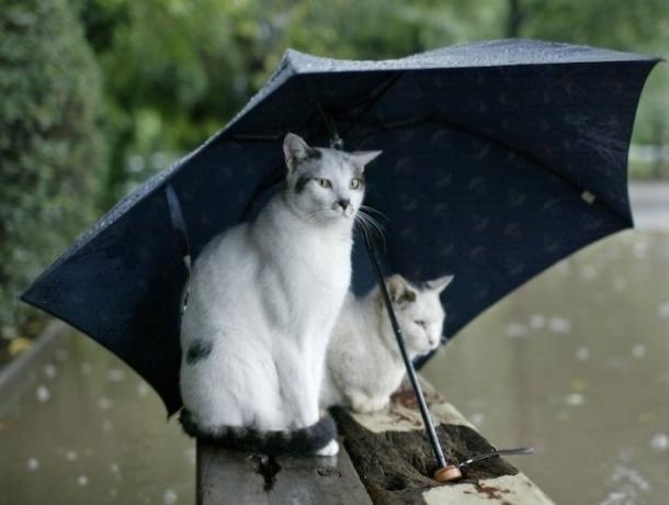 МЧС предупреждает ставропольчан о граде и шквалистом ветре