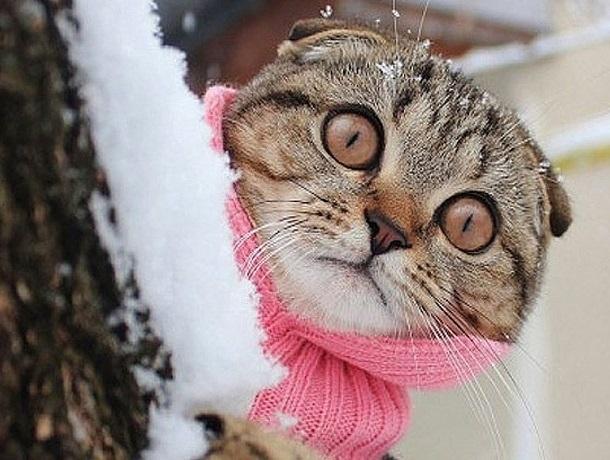 Холодно и дождливо будет в Ставрополе в пятницу