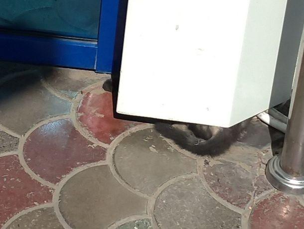 Прохожие боролись за спасение маленьких котят с сотрудниками «Пушкинского» в Ставрополе