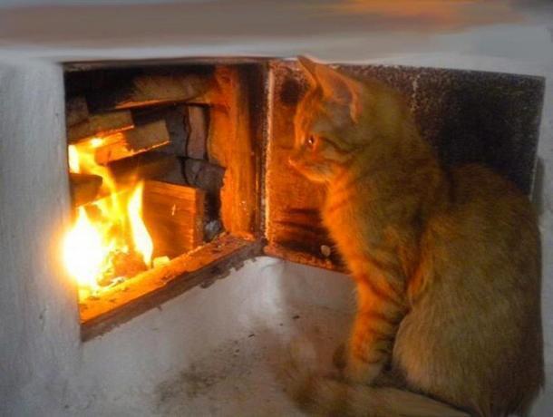 Пожар в доме на Ставрополье могла устроить кошка
