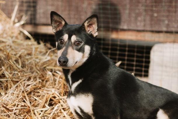 Особенная собака Шариковна ищет добрых хозяев