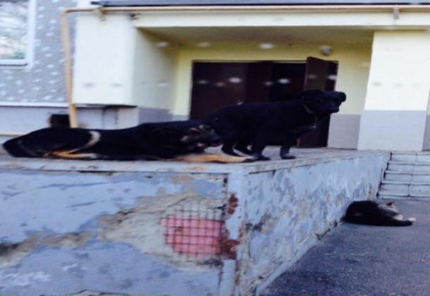 Бездомных собак на детской площадке поселили сердобольные жители Кисловодска
