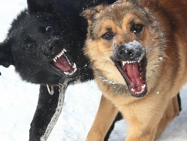 Следователи проверят администрацию Кисловодска после нападения бродячих собак на прохожих