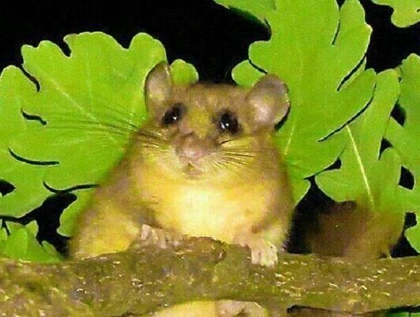 Сердитый бурундук закидал шелухой отдыхающих на природе под дубом на Ставрополье