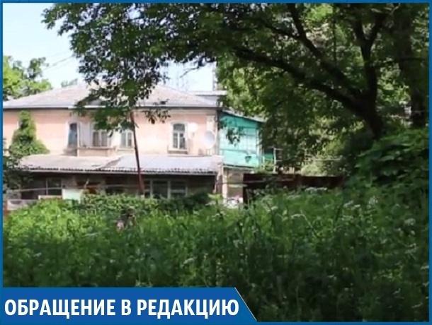 «Бурьян и амброзия в человеческий рост в центре города-курорта — это просто позорище», - житель Кисловодска
