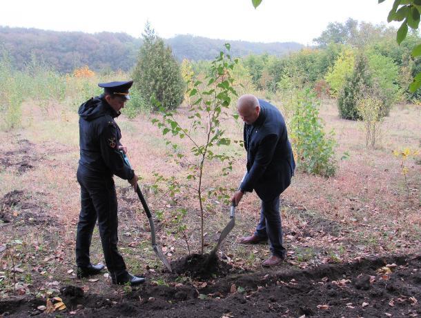 На Ставрополье полицейские посадили «Лес победы»