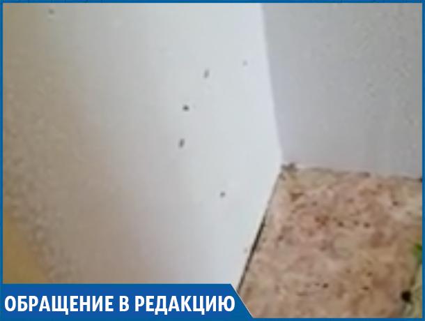 «У нас течет крыша и толпы тараканов, а управляйка ничего не делает», - ставропольчанка