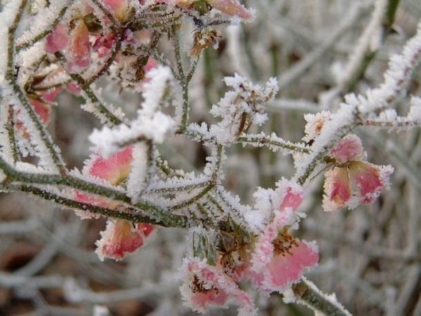 Ставрополье может остаться без ягод и фруктов из-за грядущих заморозков
