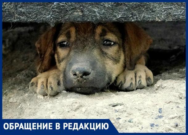 «Собаки умирали в конвульсиях», - ставропольчанка об отстреле животных в селе Александровском