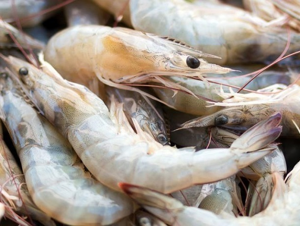 Рыбоводным предприятиям Ставрополья каждый год выделяют 3,4 млн рублей господдержки