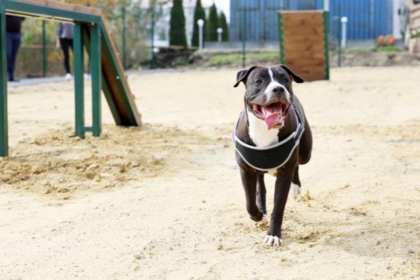 В Ставрополе открыли третью площадку для собак