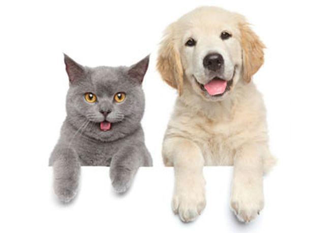 Половина ставропольцев предпочитают кошек собакам