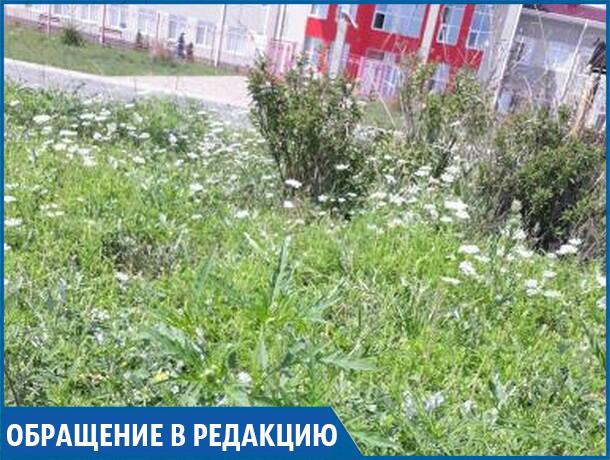 «Возле поликлиники растет целая плантация амброзии - нормально?» - жительница Ставрополя