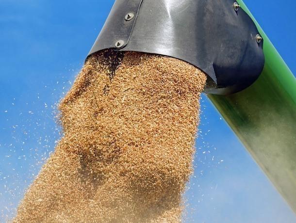 Ячмень и кукурузу в Индию, Китай и Шри-Ланку будет экспортировать Ставрополье