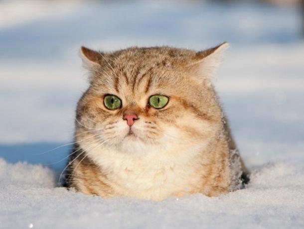 Теплая, но туманная погода ждет ставропольцев в четверг