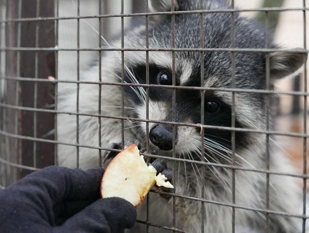 «На защиту животных»: в двух зоопарках и террариуме в Ставрополе нашли нарушения