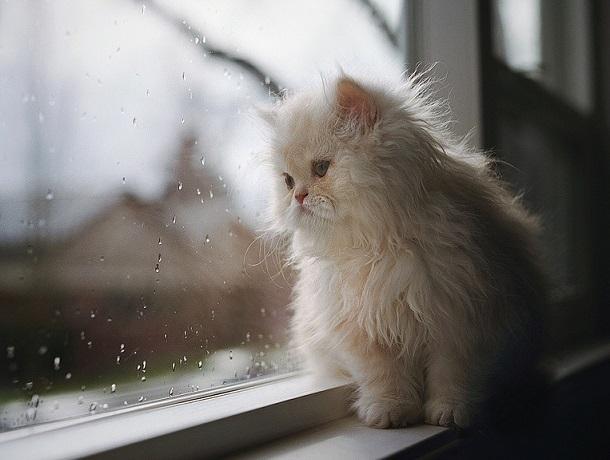 Дождливый и облачный день ждет ставропольцев в четверг