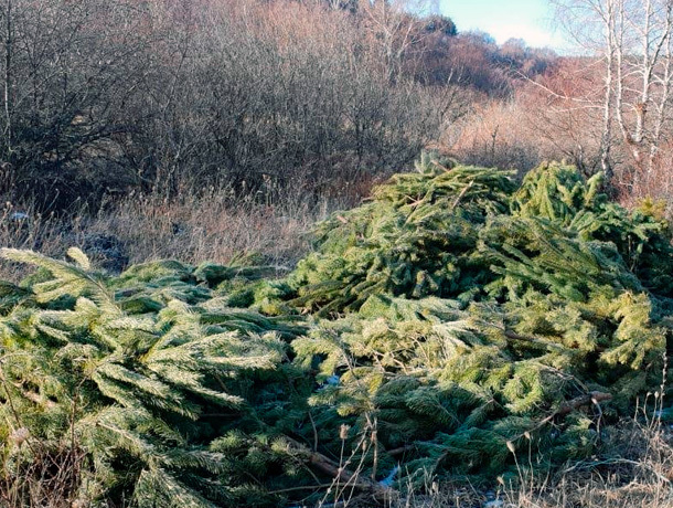 Десятки срубленных деревьев нашли около Кисловодска