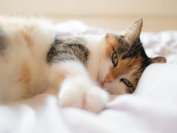 Ставропольчане предпочитают держать дома кошек